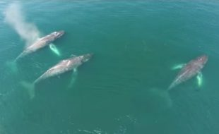 Drone News Video: SnotBot Helps Whales